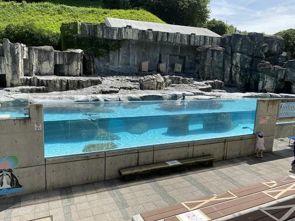 愛媛県立とべ動物園 ペンギン1