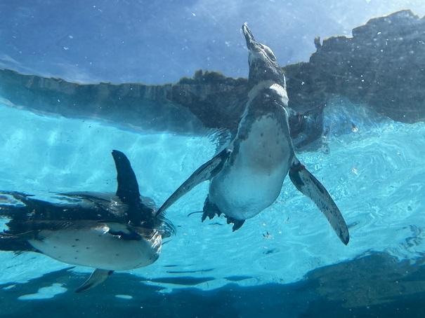 愛媛県立とべ動物園 ペンギン下から