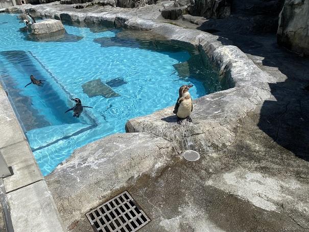 愛媛県立とべ動物園 ペンギン2