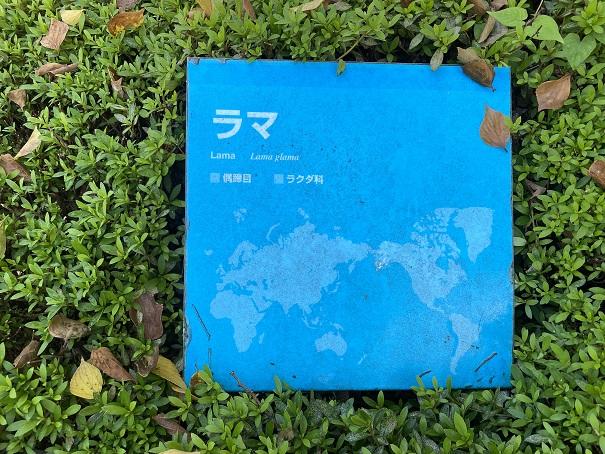 愛媛県立とべ動物園 ラマ案内