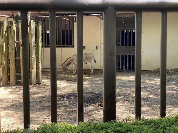 愛媛県立とべ動物園 ロバ