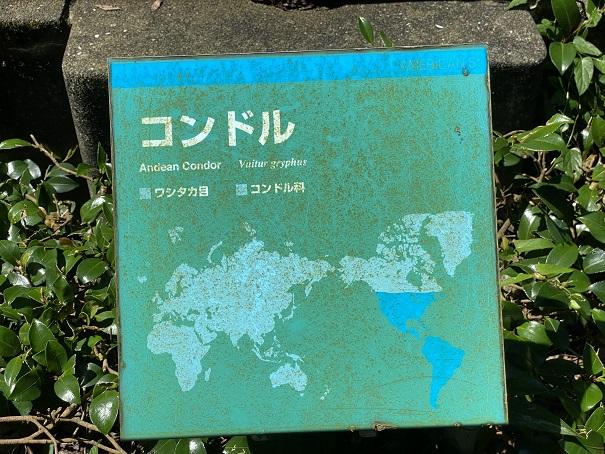 愛媛県立とべ動物園 コンドル案内