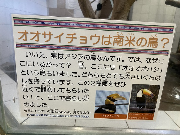 愛媛県立とべ動物園 オオサイチョウ案内