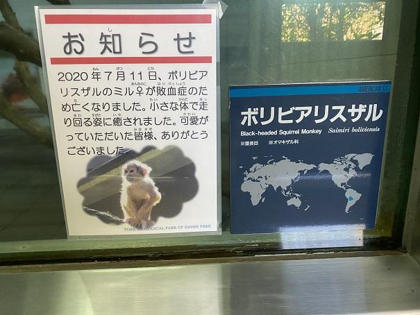 愛媛県立とべ動物園 ボリビアリスザル案内