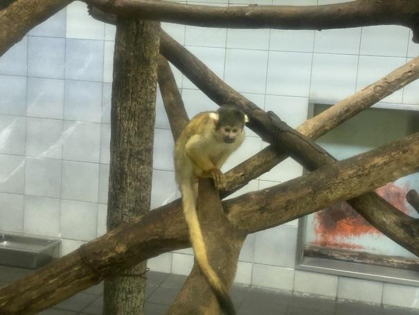 愛媛県立とべ動物園 ボリビアリスザル