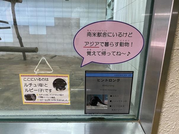 愛媛県立とべ動物園 ビントロング案内