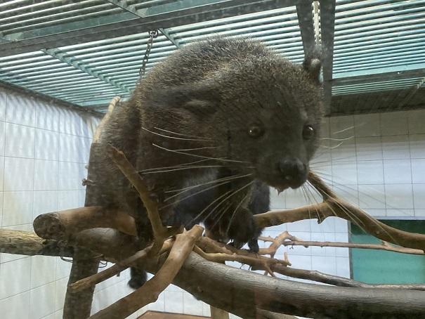 愛媛県立とべ動物園 ビントロング