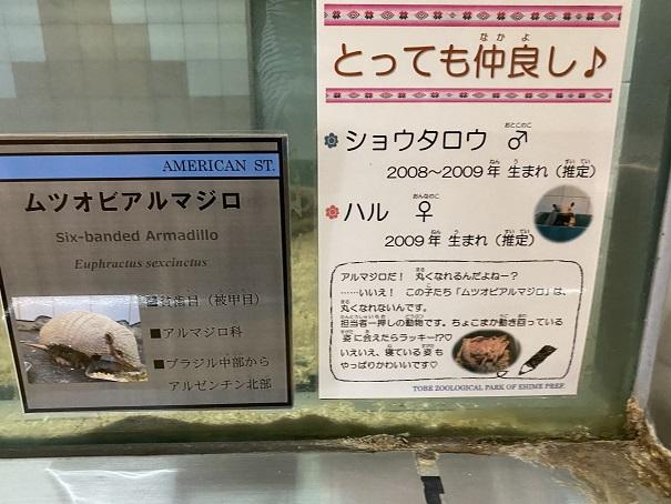 愛媛県立とべ動物園 アルマジロ案内