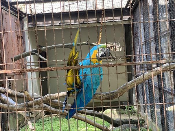 愛媛県立とべ動物園 ルリコンゴウインコ