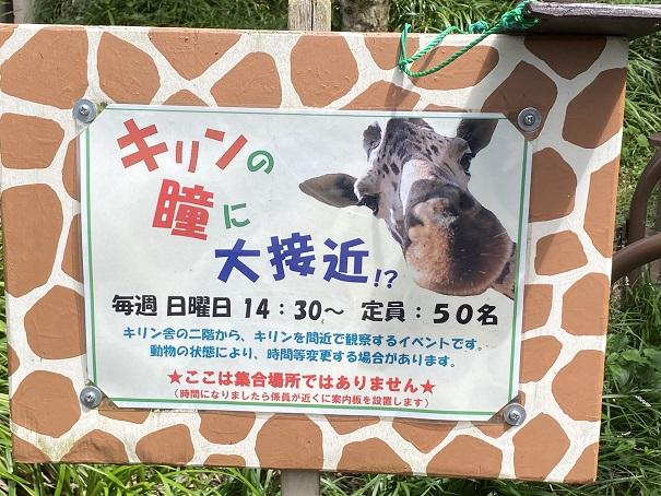 愛媛県立とべ動物園 キリンイベント