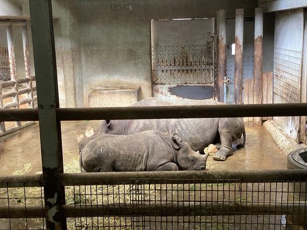 愛媛県立とべ動物園 サイ