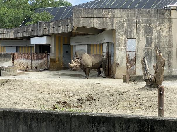 愛媛県立とべ動物園 クロサイ