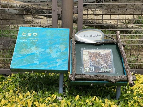 愛媛県立とべ動物園 ヒョウ案内