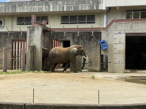 愛媛県立とべ動物園 ゾウ2