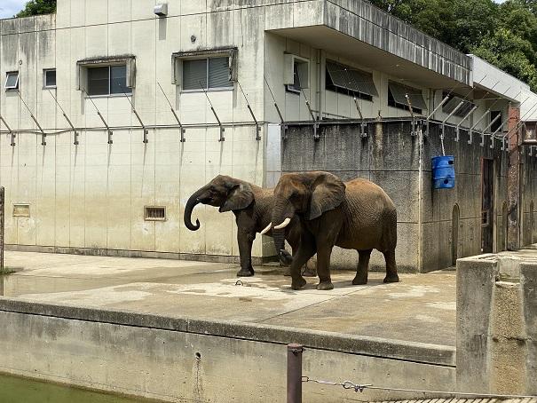 愛媛県立とべ動物園 象