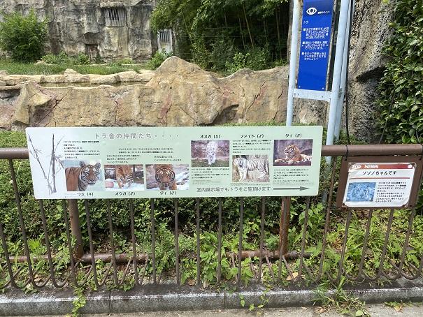 愛媛県立とべ動物園 トラ案内