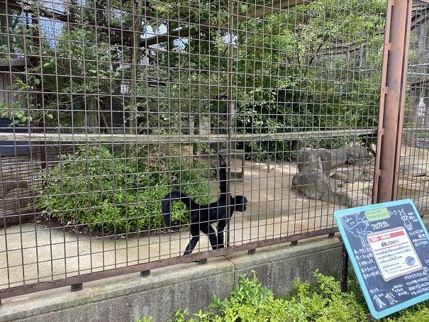 愛媛県立とべ動物園 クロクモザル