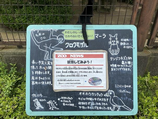 愛媛県立とべ動物園 クロクモザル 案内