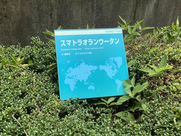 愛媛県立とべ動物園 オランウータン 案内