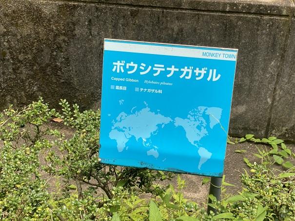 愛媛県立とべ動物園 ボウシテナガザル案内