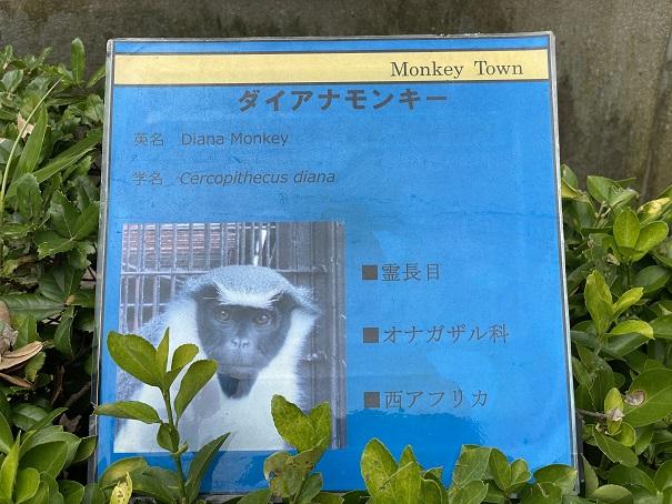 愛媛県立とべ動物園 ダイアナモンキー2