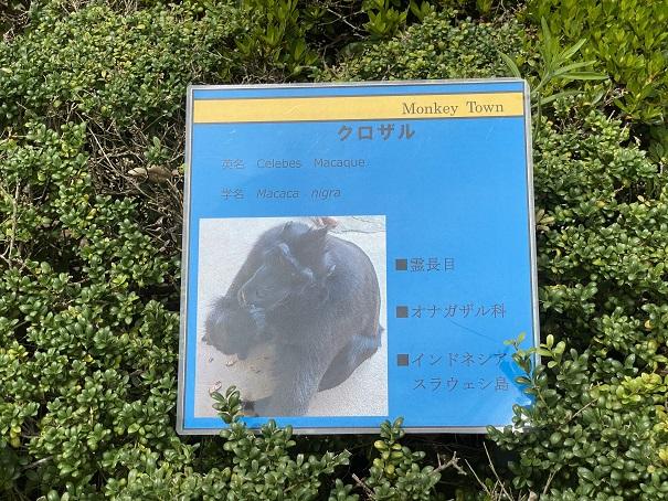 愛媛県立とべ動物園 クロザル案内