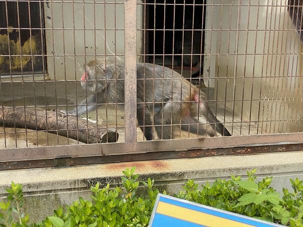 愛媛県立とべ動物園 タイワンザル