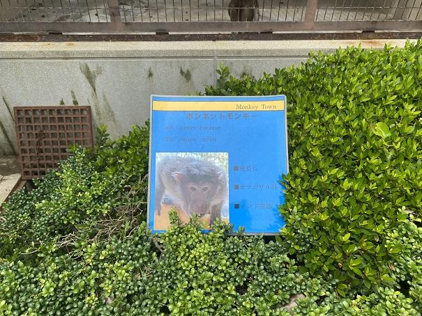 愛媛県立とべ動物園 ボンネットモンキー案内