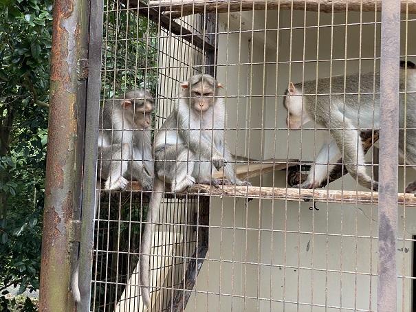 愛媛県立とべ動物園 ボンネットモンキー