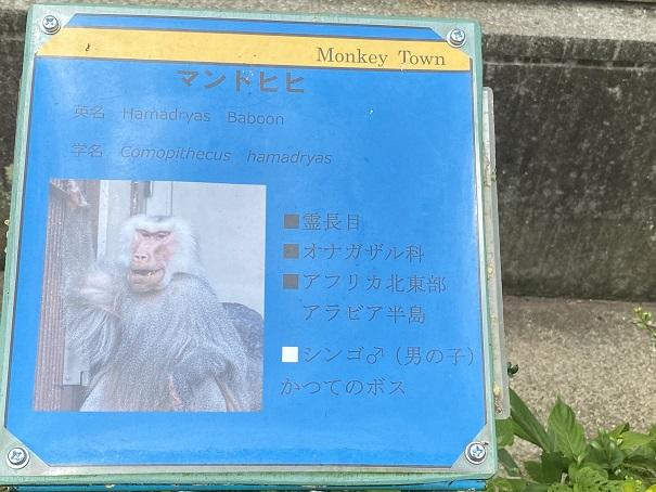 愛媛県立とべ動物園 マントヒヒ案内