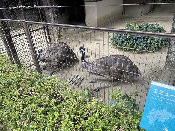 愛媛県立とべ動物園 エミュー
