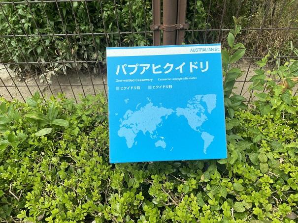 愛媛県立とべ動物園 パプアヒクイドリ