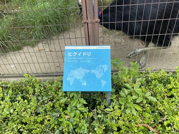 愛媛県立とべ動物園 ヒクイドリ