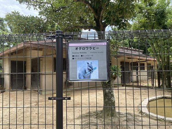 愛媛県立とべ動物園 オグロワラビー案内