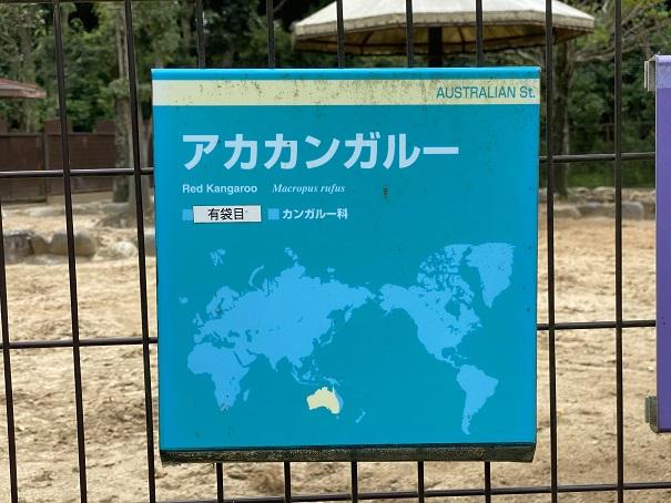 愛媛県立とべ動物園 アカカンガルー案内
