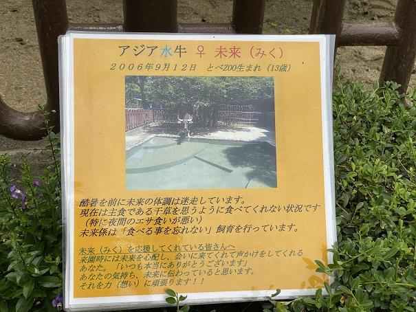 愛媛県立とべ動物園 アジア水牛 案内