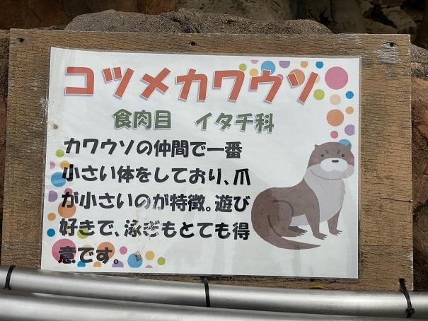 愛媛県立とべ動物園 コツメカワウソ案内