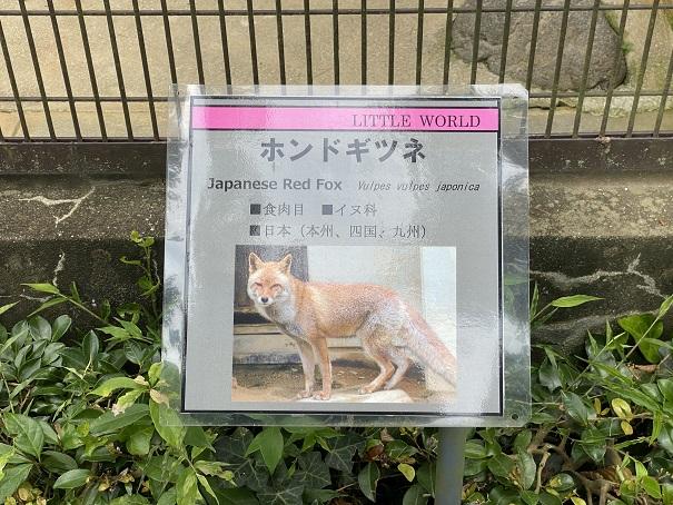 愛媛県立とべ動物園 ホンドキツネ案内