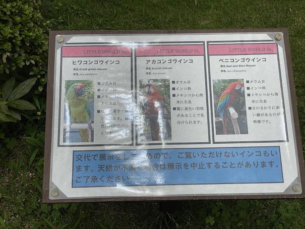 愛媛県立とべ動物園 カラフルな鳥案内