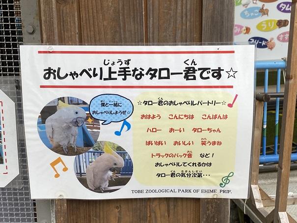愛媛県立とべ動物園 タローくん案内