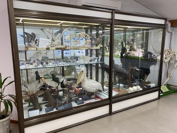 愛媛県立とべ動物園 こども動物センターはく製