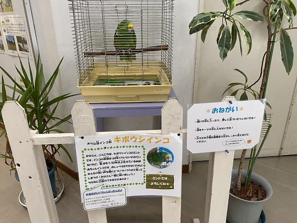 愛媛県立とべ動物園こども動物センター オウム
