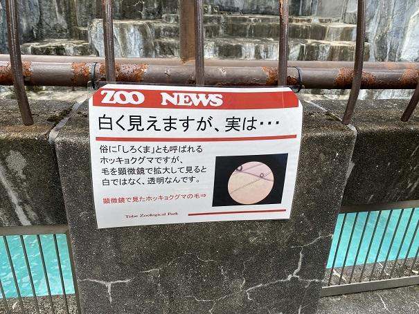 愛媛県立とべ動物園 ホッキョクグマの毛