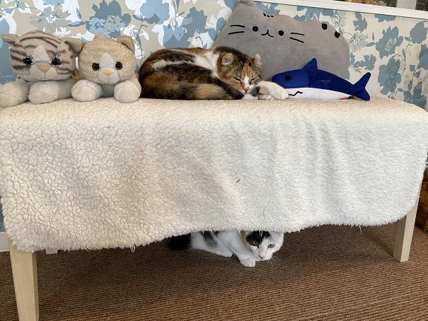 猫カフェルアナ 猫1