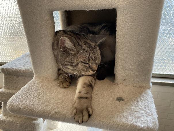 猫カフェルアナ 猫3
