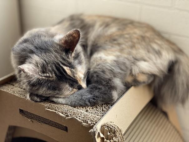 猫カフェルアナ 猫4