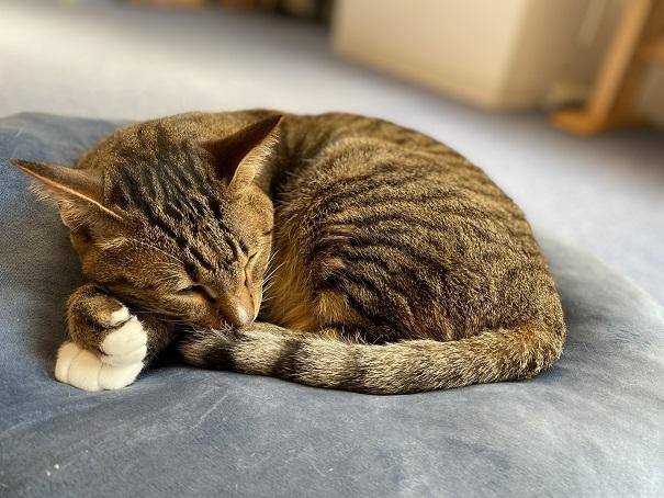 猫カフェルアナ 猫9