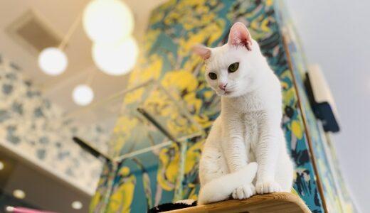猫カフェ ルアナ かわいい猫に出会って癒される 岡山市