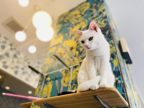 猫カフェ ルアナ