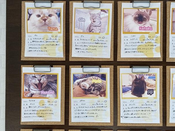 猫カフェルアナ 猫紹介1